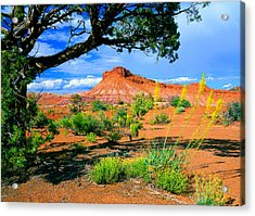 Paria Wilderness Acrylic Print