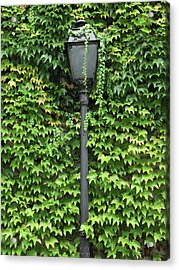 Parisian Lamp And Ivy Acrylic Print