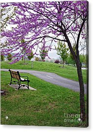 Acrylic Print featuring the photograph Park Bench With Redbud Tree Winona Mn By Yearous by Kari Yearous