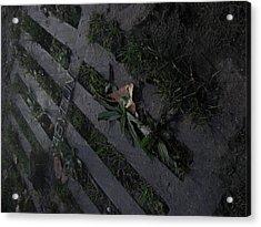 Park Sewer Acrylic Print by Jackelyn Lazaro