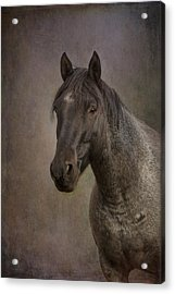 Parker Acrylic Print by Debby Herold
