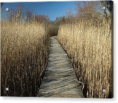 Parker River Wildlife Refuge Path Acrylic Print