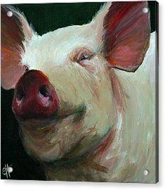 Parker The Pig Acrylic Print