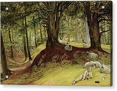 Parkhurst Woods Acrylic Print