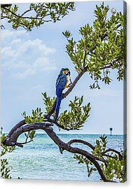 Acrylic Print featuring the photograph Parrot Above The Aqua Sea by Paula Porterfield-Izzo