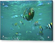 Parrot Fish Acrylic Print