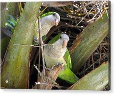 Parrot Pair Acrylic Print