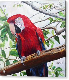 Parrot Portrait Acrylic Print by Marilyn  McNish