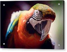 Parrot Selfie Acrylic Print