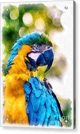 Parrot Watercolor Acrylic Print by Edward Fielding
