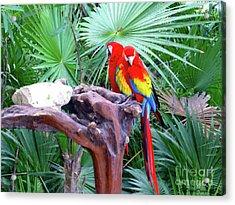 Acrylic Print featuring the digital art Parrots by Francesca Mackenney