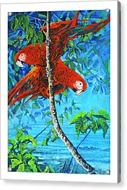 Parrots In Canopy Above Acrylic Print