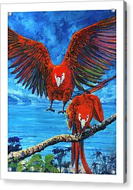 Parrots In Costa Rica Acrylic Print