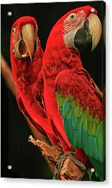 Parrots Acrylic Print