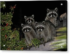 Party Of Five On The Roof Top Acrylic Print by Nina Prommer