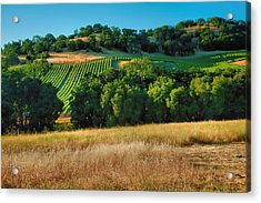Paso Robles Vineyard Acrylic Print