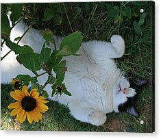 Passed Out Under The Daisies Acrylic Print by Marna Edwards Flavell
