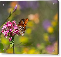 Acrylic Print featuring the photograph Passion Butterfly  by Julie Andel