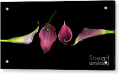 Passion Acrylic Print by Christian Slanec