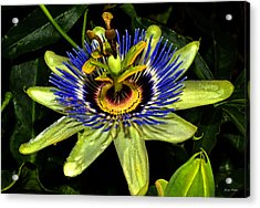 Passion Flower 003 Acrylic Print by George Bostian