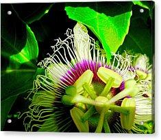 Passion Flower 2 Reflecting Acrylic Print