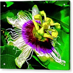 Passion Flower 3 Uplift Acrylic Print