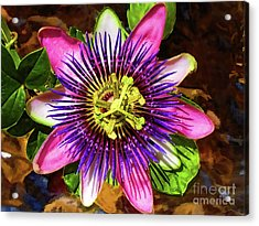 Passion Flower Acrylic Print by Mariola Bitner