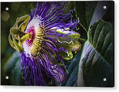 Passion Flower Profile Acrylic Print