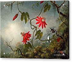 Passion Flowers And Hummingbirds 1870 Acrylic Print by Padre Art