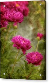 Passion For Pink Acrylic Print