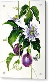 Passion Fruit Acrylic Print by Lorraine Romaior