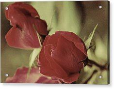 Passion In Pink Acrylic Print by Trudi Southerland