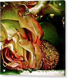 Passion Acrylic Print by Monroe Snook