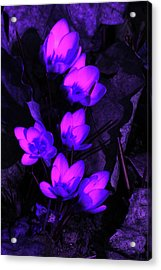 Passionate Blooms Acrylic Print by Karol Livote