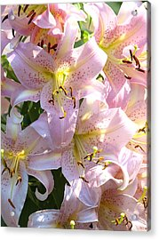 Passionate Pink Acrylic Print by Kim