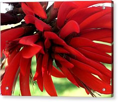 Passionate Red Acrylic Print by Jean Booth