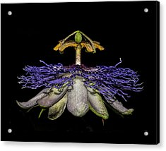 Passionfruit Acrylic Print