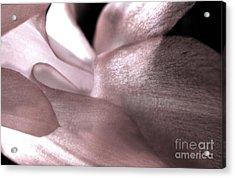 Passion's Glow Acrylic Print by Karen Adams