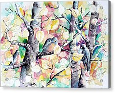 Pastel Aspen With Robins Acrylic Print