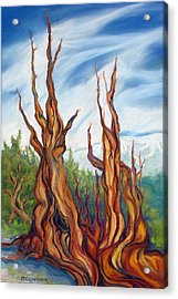 Acrylic Print featuring the painting Pastel Bristlecone by Pat Crowther