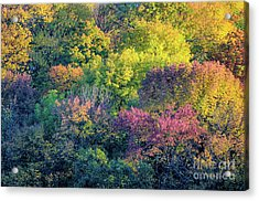 Pastel Colors Of Fall Radnor Lake Nashville Tn Acrylic Print by Photo Captures by Jeffery