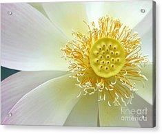 Pastel Lotus Too Acrylic Print by Sabrina L Ryan