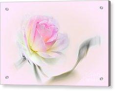 Pastel Passion Acrylic Print by Kaye Menner