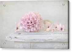 Pastel Pink Hyacinth Acrylic Print