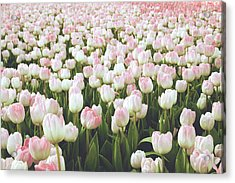 Pastel Pink Tulips- Art By Linda Woods Acrylic Print by Linda Woods