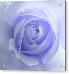 Pastel Purple Rose Flower Acrylic Print by Jennie Marie Schell