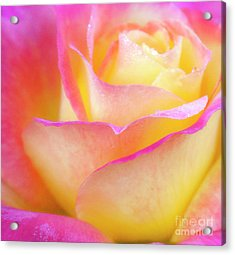 Pastels Acrylic Print by David Millenheft