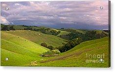 Pastoral California Hillside Acrylic Print by Matt Tilghman