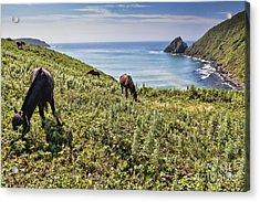 Pasture #2746 Acrylic Print