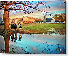 Acrylic Print featuring the photograph Pasture At Bacon's Castle by Williams-Cairns Photography LLC